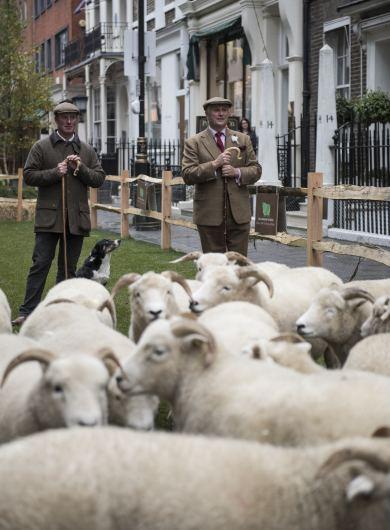 Anderson & Sheppard Savile Row Bespoke Tailors Savile Row Field Day Organisers